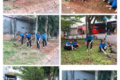 Đoàn TN Trường MG Bình Minh ra quân dọn vệ sinh làm cỏ trồng cây ở đường hoa thanh niên. Lập thành tích chào mừng ngày nhà giáo VN 20/11/2019